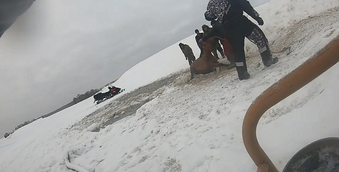 Atlar böyle kurtarıldı