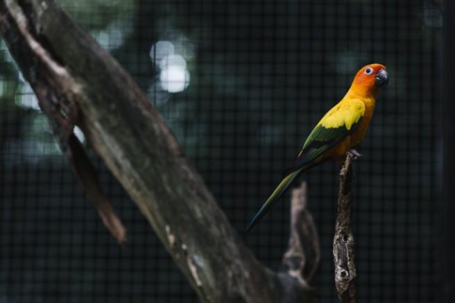 10 yeni kuş türü