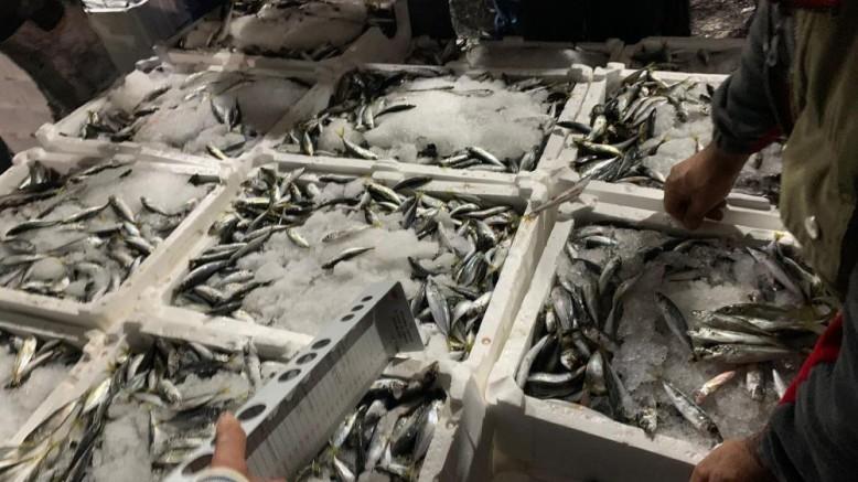17 ton küçük boy istavrit ele geçirildi