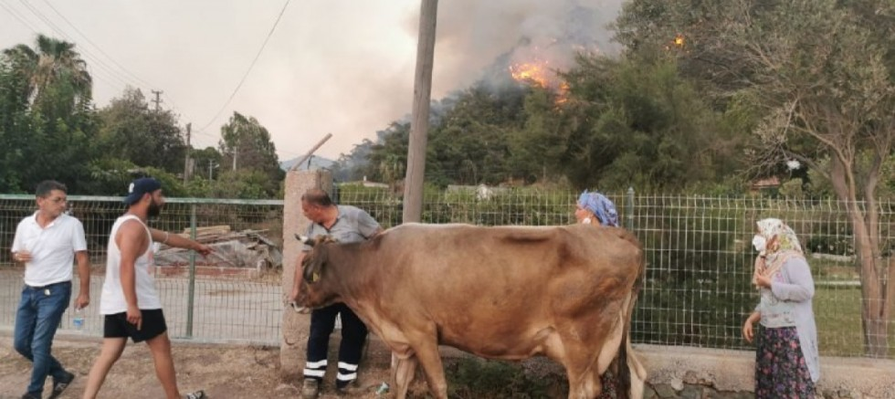 Alevlere teslim olan Marmaris'te görüntüler