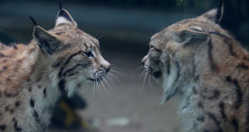 Bursa Hayvanat Bahçesi kapılarını açtı