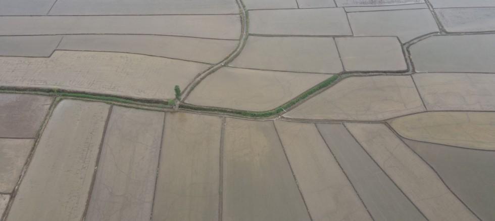 Çorum'daki çeltik tarlaları havadan görüntülendi.