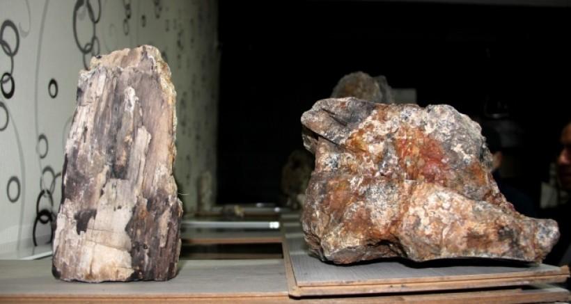 Erzurum'da 160 milyon yıllık taşlaşmış fosil ağaç bulundu