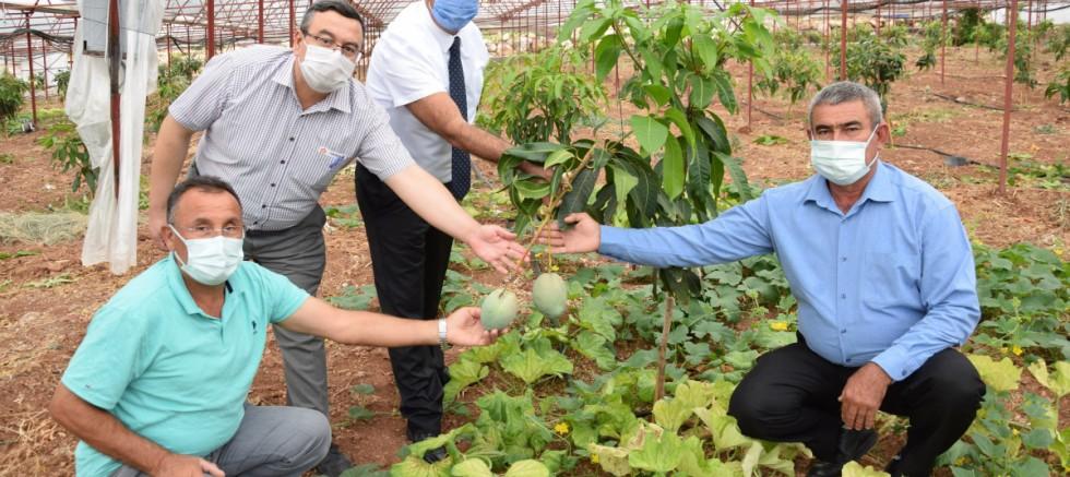Geleneksel ürünlerde maliyet artınca çiftçiler tropik meyvelere yöneldi