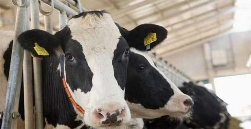 Generaller 'Süt Bank' mağduru