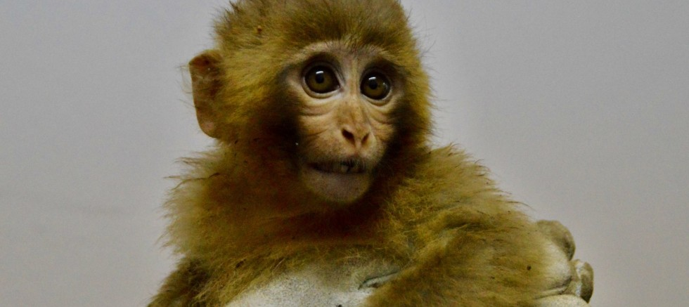 Gürbulak Gümrük Kapısında 12 maymun yakalandı