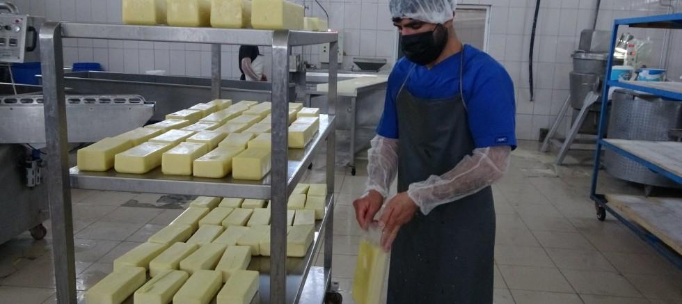 Karadeniz'in mıhlama peynir ihtiyacı Muş'tan