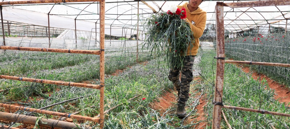 Koronavirüsün çiçek sektörüne etkisi 30 milyon dolar