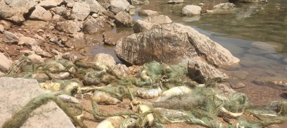 Suya kaçak ağ bıraktılar, çok sayıda balık telef oldu