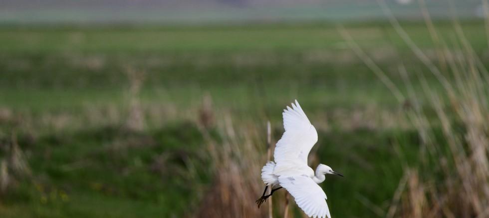 Van Gölü Havzası göçmen kuşlarla renklendi