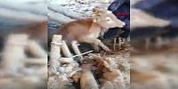 Malatya'da hayvanlar kurtarıldı