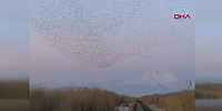 Kuşların dansı